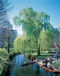 The romance of punting on the river Avon, Christchurch