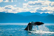 Whale Watching in Kaikoura, New Zealand - Photography by Chris McLennan