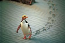 New Zealand is committed to protecting its beautiful wildlife - Photography by Tourism New Zealand